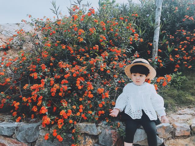Phượt thủ nhí đáng yêu bên sắc cam của hoa ngũ sắc
