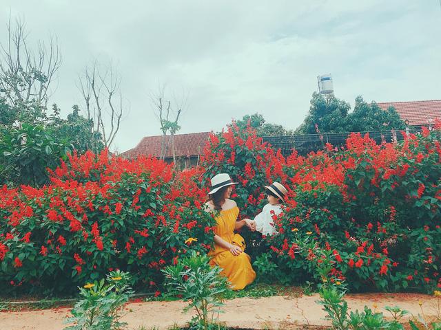 Họ ngọt ngào bên sắc đỏ của hoa xác pháo