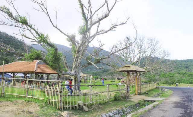 Hai cây sung rừng hơn 100 tuổi là nét nổi bật nhất của trang trại B and U farm