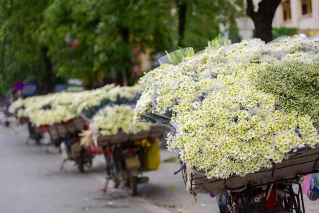 Sắc trắng tinh khôi của cúc họa mi trải dài trên những con phố khiến cho Hà Nội mang vẻ đẹp bình yên đến lạ!
