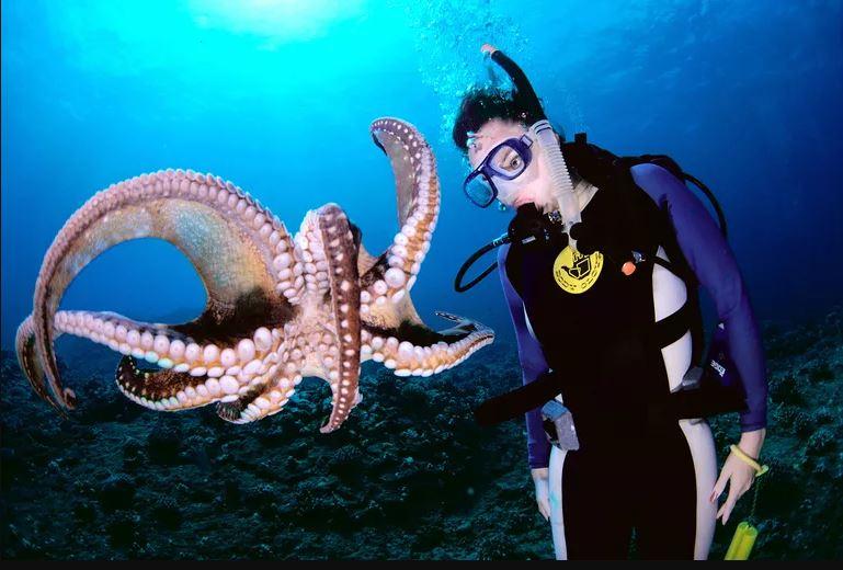 đồ bơi đồ lặn siêu phong cách