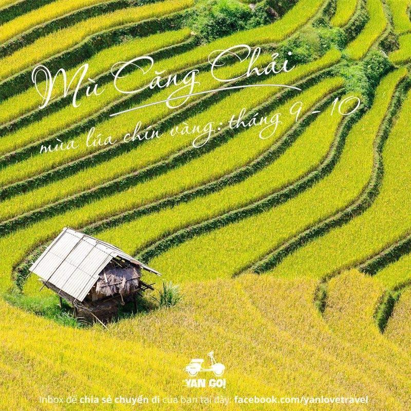 tour mu cang chai , thang 9-10, ruộng bậc thang mu cang chai