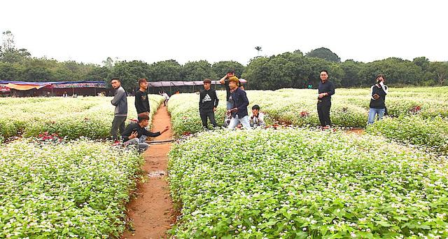 Đám thanh niên cũng đến cánh đồng hoa rất nhiều để ghi lại những tấm hình đáng quý giá này.