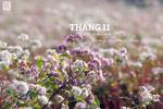 Tháng 11 và những cung đường hoa