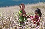 Hà Giang say đắm những mùa hoa