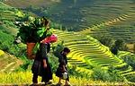 9 lý do Khách Tây yêu thích trekking ở Sapa