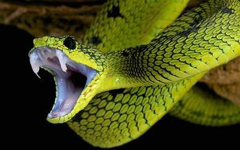 Phòng chống và sơ cứu khi bị rắn cắn